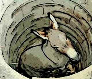 Donkey Fell into Well
