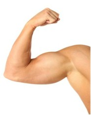Flex Muscle