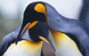 410-penguin